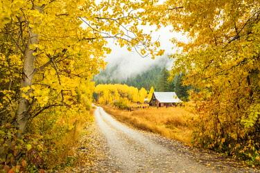 USA13322AW Old Barn in Autumn, Wenatchee National Forest, Washington, USA