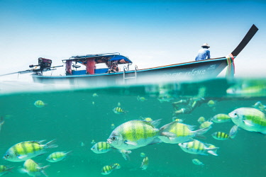 THA1332AW Ko Lipe, Satun Province, Thailand. Split image of tourist on long tail boat and colorful fishes underwater.