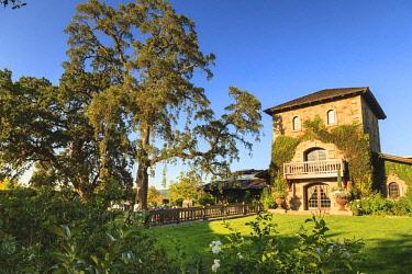 US05SWR0348 V. Sattui Winery, St. Helena, Fall Grapes, Napa, Central California, USA