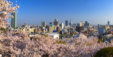 JAP1348AW Cherry blossom and view of Kobe skyline, Kobe, Kansai, Japan