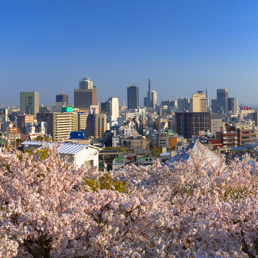 JAP1349AW Cherry blossom and view of Kobe skyline, Kobe, Kansai, Japan