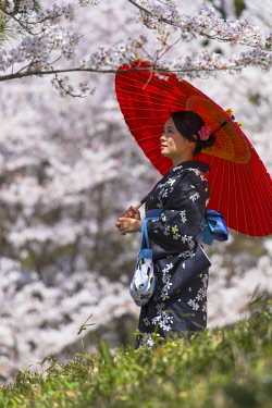 JAP1371AW Woman in kimono standing amongst cherry blossom, Kyoto, Kansai, Japan (MR)