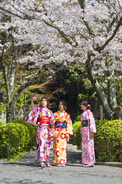 JAP1374AW Women in kimonos in garden with cherry blossom, Kyoto, Kansai, Japan