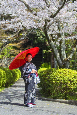 JAP1375AW Woman in kimono in garden with cherry blossom, Kyoto, Kansai, Japan (MR)