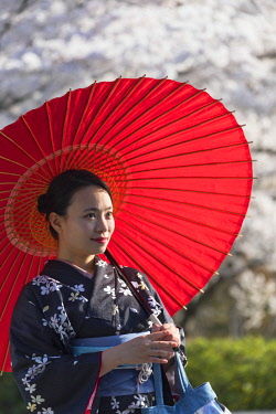 JAP1378AW Woman in kimono under cherry blossom, Kyoto, Kansai, Japan (MR)