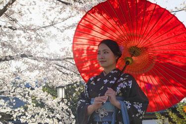 JAP1383AW Woman in kimono under cherry blossom, Kyoto, Kansai, Japan (MR)