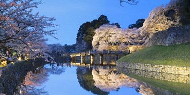 JAP1390AW Cherry blossom and bridge at Hikone Castle, Hikone, Kansai, Japan