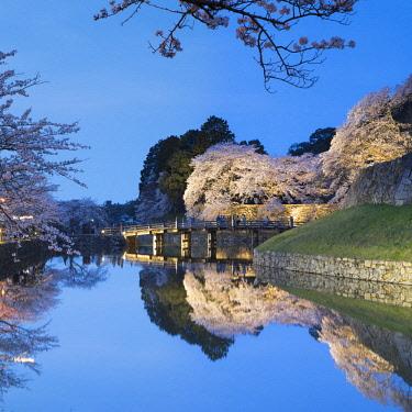 JAP1391AW Cherry blossom and bridge at Hikone Castle, Hikone, Kansai, Japan