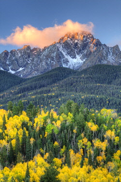 US06BJY0784 USA, Colorado, San Juan Mountains. Mt. Sneffels and forest at sunrise.