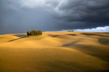 ITA12381AW Cypress trees and Stormy weather, Val d'Orcia, Tuscany.