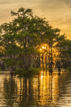 US19BJY0062 USA, Louisiana, Atchafalaya National Heritage Area. Tupelo trees in lake at sunset.