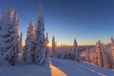 US27CHA3781 Setting sun through forest of snow ghosts at Whitefish, Montana, USA