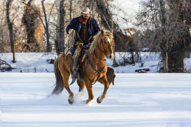 US51HLL0014 USA, Wyoming, Shell, Kicking Up the Snow (MR,PR)