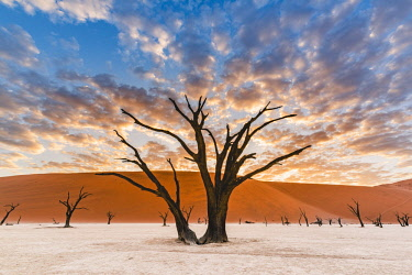 NAM6531AWRF Deadvlei clay pan, Namib-Naukluft National Park, Namibia, Africa. Dead acacia trees and sand dunes.
