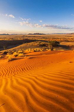NAM6483AW Namib-Naukluft National Park, Namibia, Africa. Ripples of sand on a petrified dune at sunset.