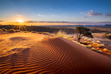 NAM6485AW Namib-Naukluft National Park, Namibia, Africa. Ripples of sand on a petrified dune at sunset.