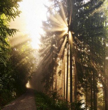 IBLDPO04644977 Sun shinning through forest, path, Tyrol, Austria, Europe