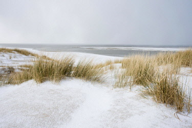 IBXENH04650357 Dunes with beach grass on snow, North Sea, Langeoog, East Frisia, Lower Saxony, Germany, Europe