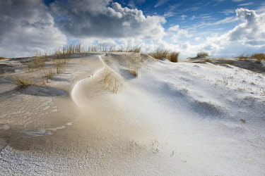 IBXENH04650396 Dunes with beach grass and snow, North Sea, Langeoog, East Frisia, Lower Saxony, Germany, Europe