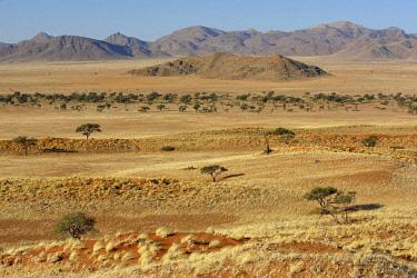 IBXFVP04631444 Barren grassland, Gondwana Namib Park, near Sesriem, Hardap Region, Namibia, Africa
