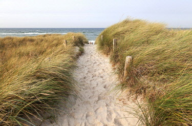 IBXHAL04650362 Way to the beach, European Marram Grass (Ammophila arenaria), Darsser Ort, Fischland-Darss-Zingst, Western Pomerania Lagoon Area National Park, Baltic Sea coast, Mecklenburg-Western Pomerania, Germany...