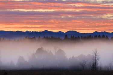IBXMAN04635320 Alpine foothills landscape at morning fog, morning atmosphere, Kirchseemoor near Sachsenkam, Toezer Land, Upper Bavaria, Bavaria, Germany, Europe