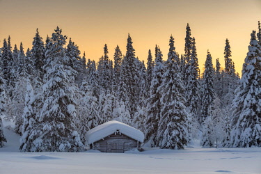 IBXROH04644764 Snow-covered hut in winter landscape, morning atmosphere, Pallastunturi, Pallas-Yllästunturi National Park, Muonio, Lapland, Finland, Europe