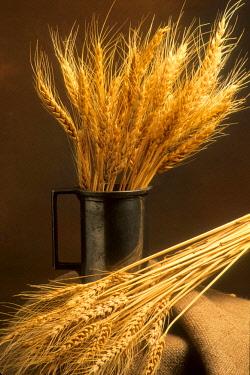 IBXBEJ04051673 Still life of wheat