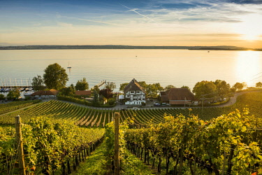 IBXDJS04635796 View of Lake Constance and vineyards, sunset, Meersburg, Baden-Wurttemberg, Germany, Europe