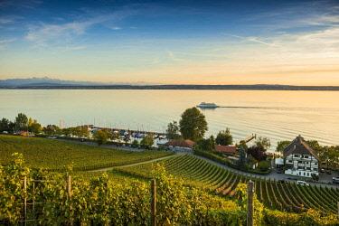 IBXDJS04635798 View of Lake Constance and vineyards, Meersburg, Baden-Wurttemberg, Germany, Europe