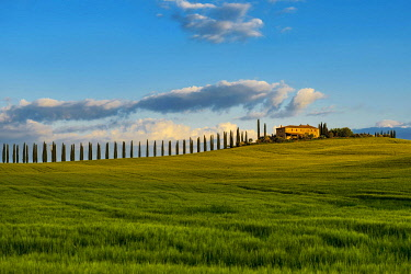 IBXDJS04636413 Tuscany landscape with cypresses and farmstead, sunset, San Quirico d' Orcia, Val d' Orcia, Tuscany, Italy, Europe