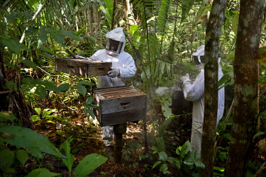 IBXFLK04413736 Two beekeepers with beehives in the Amazon rainforest, honeybee (Apis mellifera), Asentamento Areia, Trairao District, Para�, Brazil, South America
