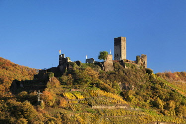 IBXMAL04638688 Ruins of Metternich Castle with vineyard, Moselle, Rhineland-Palatinate, Germany, Europe