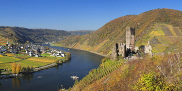 IBXMAL04638710 Ruins of Metternich Castle with vineyard, Beilstein, Moselle, Rhineland-Palatinate, Germany, Europe