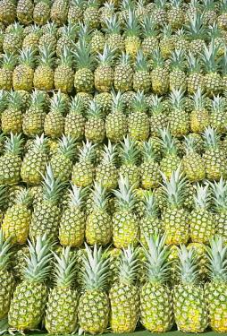 IBXSIM04479591 Harvested organic pineapples, Sarapiqui, Costa Rica, Central America