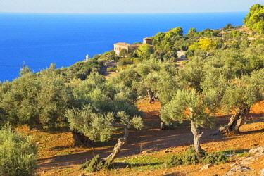 IBXSIM04622843 Olive trees surrounding Son Marroig Mansion, Deia, Mallorca, Balearic Islands, Spain, Europe