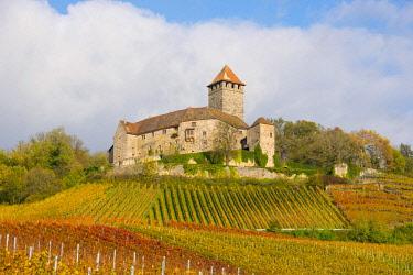 IBXTKE04606626 Castle Lichtenberg, Vineyards, Autumn Landscape, Oberstenfeld, Baden-Wurttemberg, Germany, Europe