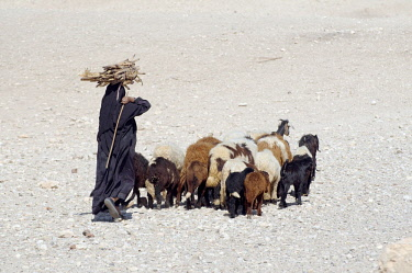 IBLAAA03764991 Bedouin woman carrying sugarcane on her head, with a herd of goats, Luxor, Luxor Governorate, Egypt, Africa