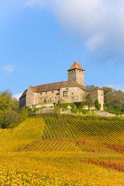 IBXTKE04606631 Castle Lichtenberg, Vineyards, Autumn Landscape, Oberstenfeld, Baden-Wurttemberg, Germany, Europe
