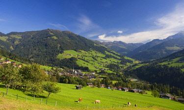 IBXWWE03871369 Pasture, cows, Kitzbuhel Alps, Alpbach valley, Alpbach, Tyrol, Austria, Europe