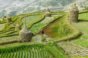 IBLCXB04152875 Terraced fields in Dong village, Tang'an, Guizhou Province, China, Asia