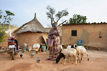 IBLFLK04517674 Woman feeding chickens and sheep with corn and sorghum, Toeghin village, Oubritenga province, Plateau Central region, Burkina Faso, Africa *** IMPORTANT: Use by development aid organizations in German...