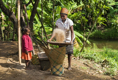 IBLGVA04585671 Woman cleaning the grain, winnowing rice grains, ethnic group of Betsimisaraka, Ambavaniasy, Madagascar, Africa