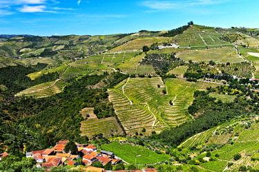 IBLGVA04636634 Vineyard region Alto Douro in the valley of Rio Pinhao, Portugal, Europe