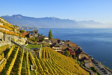 IBXSHU04479924 Vineyards in autumn, view of Lake Geneva and winegrowing village Saint-Saphorin, Lavaux, Canton of Vaud, Switzerland, Europe