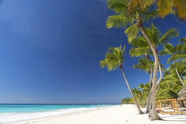 IBXPSF04346380 Dream beach, sandy beach with palm trees and turquoise sea, Parque Nacional del Este, Isla Saona, Dominican Republic, Caribbean, Central America