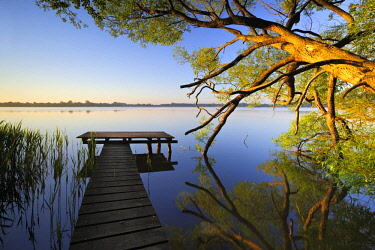 IBXAVI04440569 Small wooden pier going out into the water with exceptional tree in morning light, Lake Schaalsee, Mecklenburg-Western Pomerania, Germany, Europe