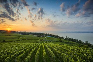 IBXDJS04444212 Vineyards between Hagnau and Meersburg, sunrise, cloudy sky, Lake Constance, Baden-Wurttemberg, Germany, Europe