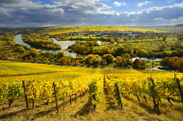 IBLAVI04450908 Vineyards in autumn, view of River Main, winegrowing town of Nordheim and Kreuzberg, dark clouds, Lower Franconia, Franconia, Bavaria, Germany, Europe