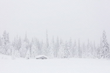 CLKRM87728 Mist on the snowy forest, Levi, Kittila, Lapland, Finland